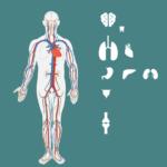 Ciri - Ciri Penyakit Gagal Ginjal